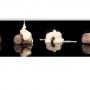 Marrons Glacés originaris del Piamonte (Itàlia). Sens dubte els millors del món. Una